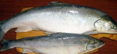 DataLife Engine Версия для печати Засолювання риби в домашніх умовах: покрокові рецепти соління річковий і червоної риби (фото і